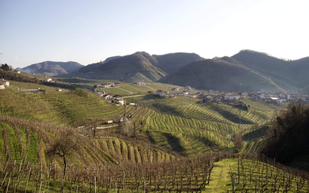 Not drinking sugary beverages helps Italians stay thin. Most beverages they do drink grow in vineyards, like this one in Valdobbiadene. ©KettiWilhelm2020