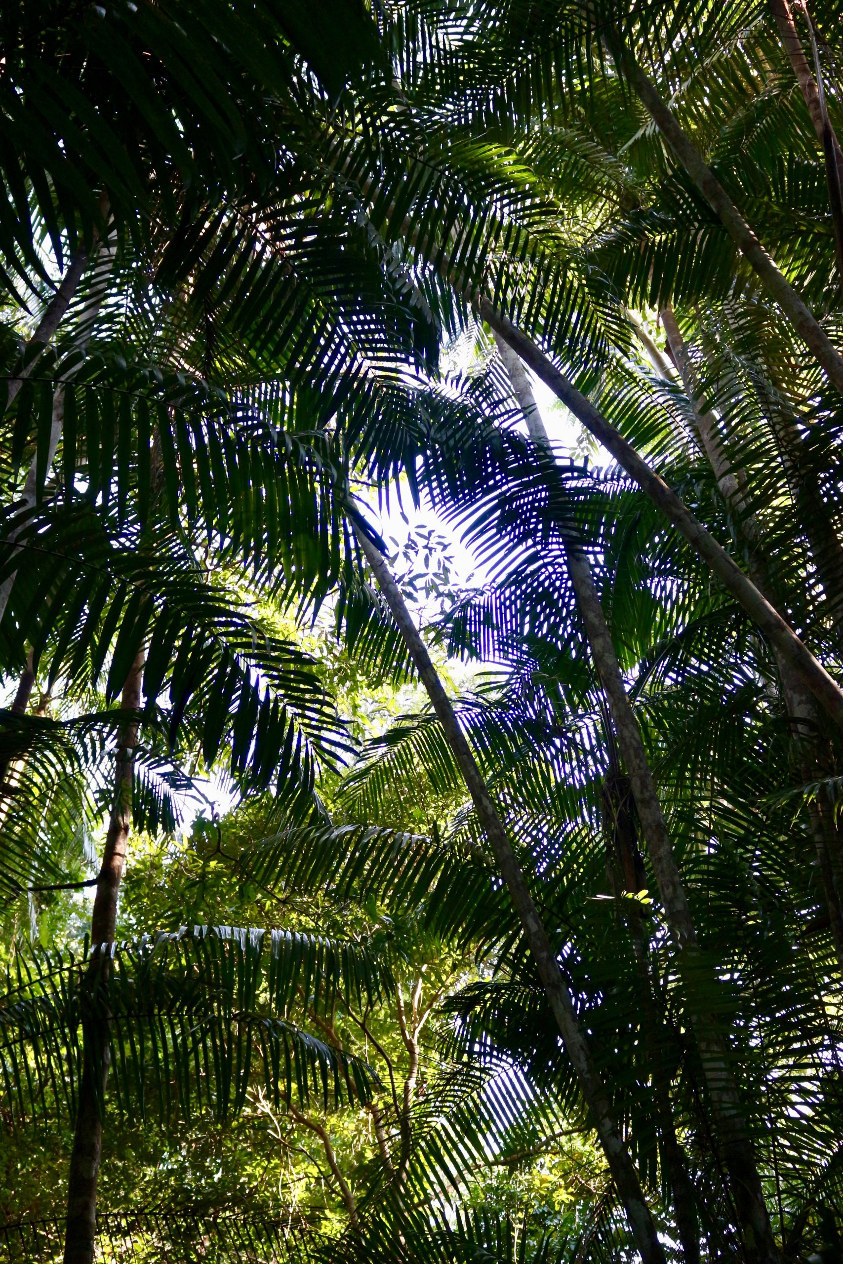 Looking up at green palm trees at an eco-resort in a jungle in Thailand. ©KettiWilhelm