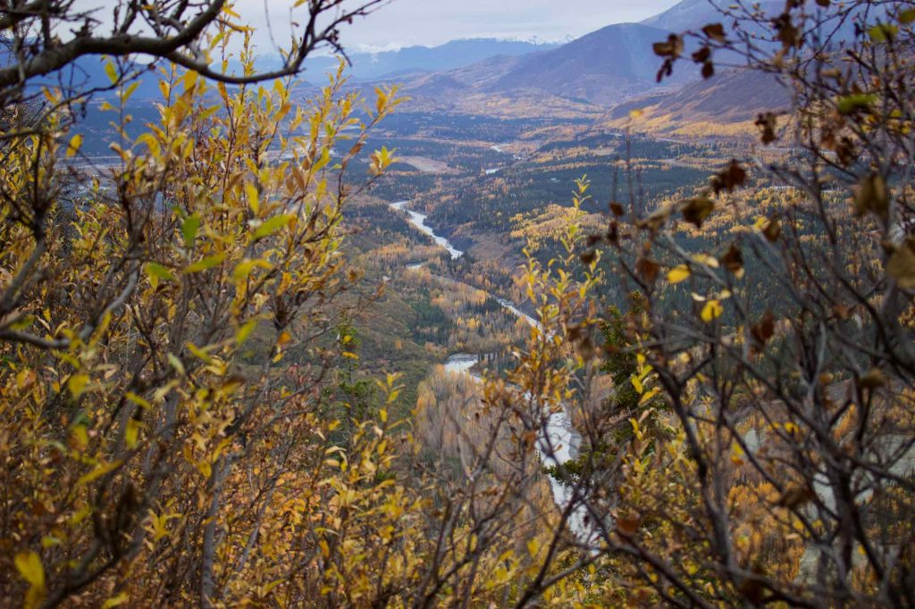 Autumn leaves and a bright, wide river valley in Alaska's Chugach mountains, seen from the top of a hike, a few hours outside of Anchorage. ©KettiWilhelm2021